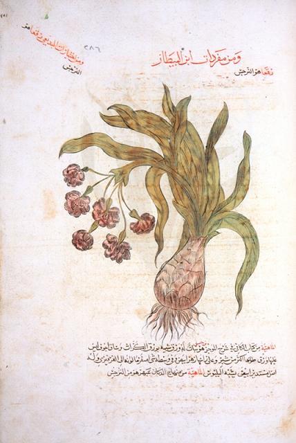 baytar